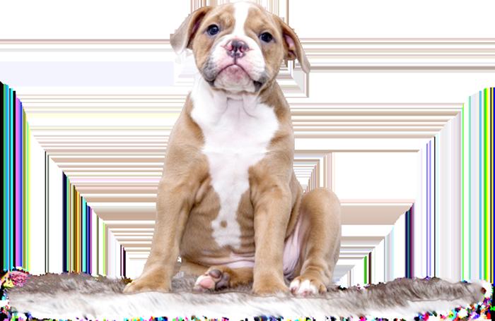 kutya-rehabilitáció