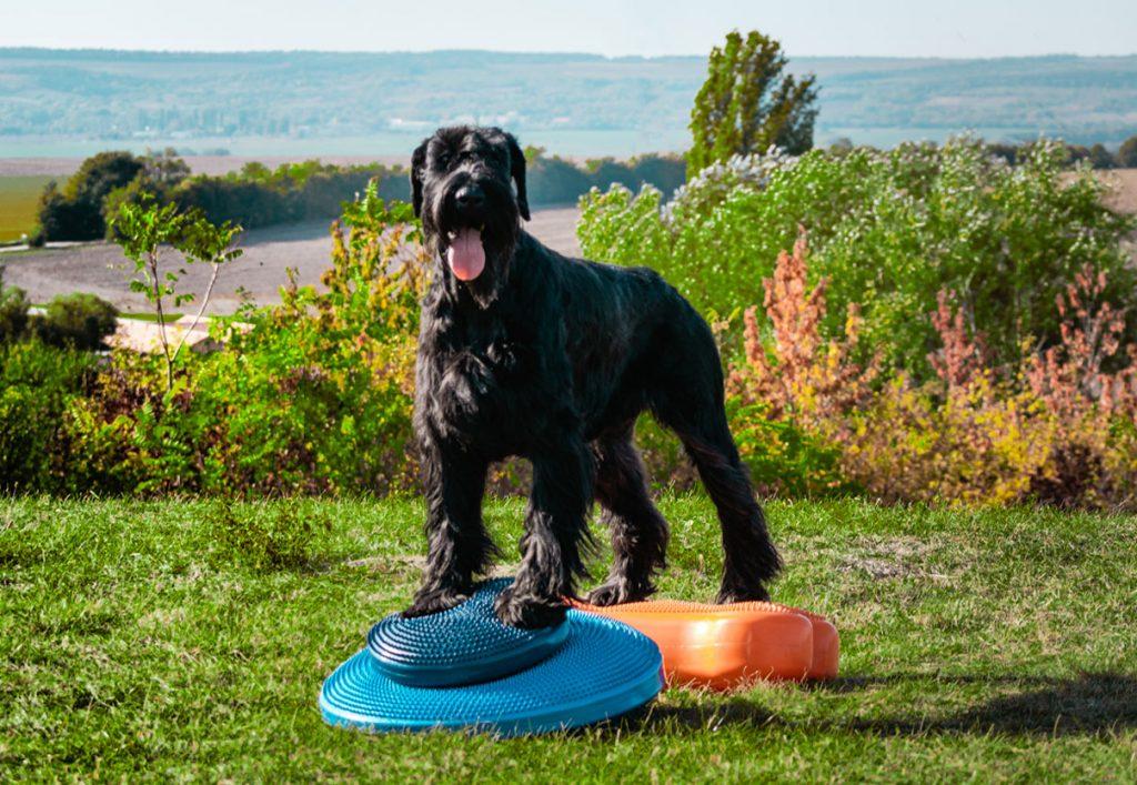kutya-fizioterápia