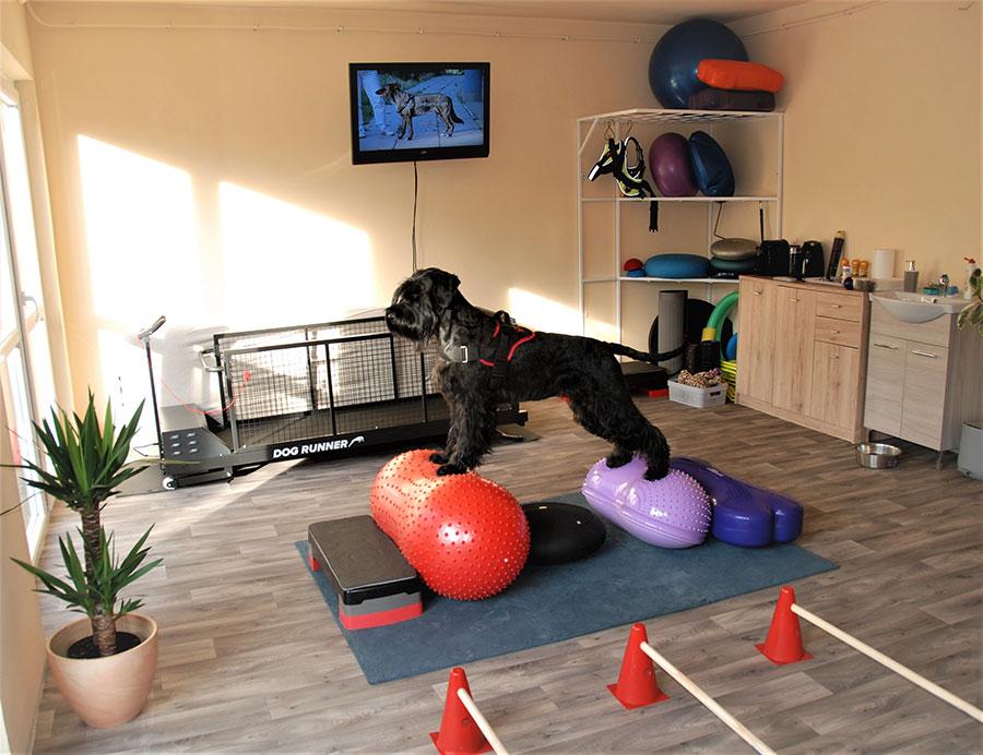 kutya-fitness